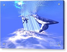 Blue Whales Acrylic Print by Corey Ford
