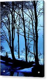 Blue Woods Acrylic Print by Karol Livote