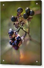 Blueberry Nr.1 Acrylic Print by Mah FineArt