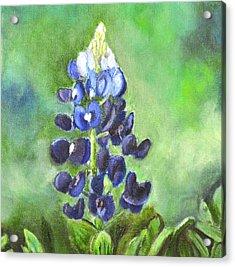 Bluebonnet Acrylic Print by Melissa Torres