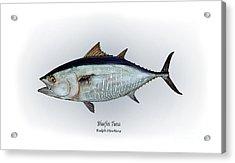 Bluefin Tuna Acrylic Print by Ralph Martens