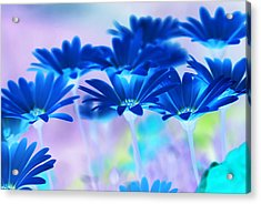 Bluemination Acrylic Print by Robin Webster