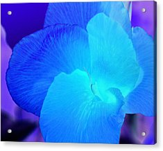 Blurple Flower Acrylic Print by James Granberry
