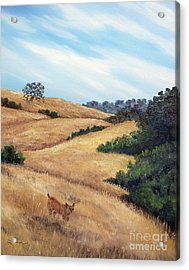 Bobcat At Rancho San Antonio Acrylic Print by Laura Iverson