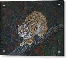 Bobcat Acrylic Print by Joan Barnard