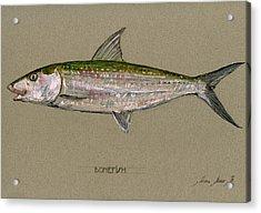 Bonefish Acrylic Print by Juan  Bosco