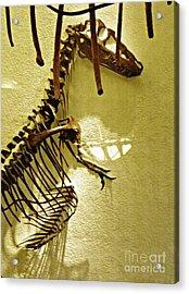 Bones Tell Stories Acrylic Print by Sarah Loft
