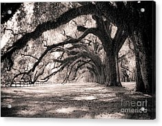 Boone Hall Plantation Live Oaks Acrylic Print by Dustin K Ryan