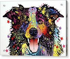 Border Collie 2 Acrylic Print by Dean Russo