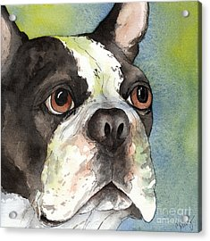 Boston Terrier Close Up Acrylic Print by Cherilynn Wood