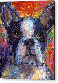 Boston Terrier Impressionistic Portrait Painting Acrylic Print by Svetlana Novikova