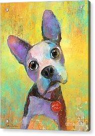 Boston Terrier Puppy Dog Painting Print Acrylic Print by Svetlana Novikova