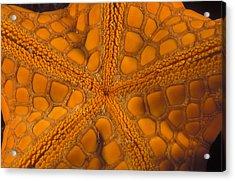 Bottom Of Orange Sea Star Or Starfish Acrylic Print by James Forte