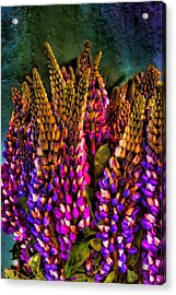 Bouquet Of Lupin Acrylic Print by David Patterson
