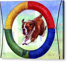 Boxer Dog Agility Class Acrylic Print by Olde Time  Mercantile