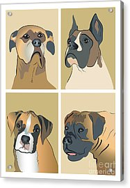 Boxer Dogs 4 Up Acrylic Print by Robyn Saunders