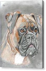 Boxer Acrylic Print by Don  Gallacher