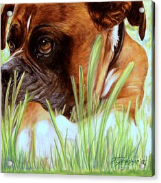 Boxer  Acrylic Print by Patricia L Davidson