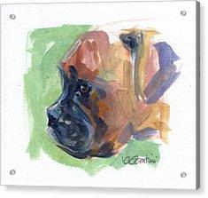 Boxer Pup Acrylic Print by Kimberly Santini