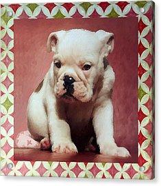 Boxer Puppy Painting Acrylic Print by Enzie Shahmiri