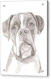 Boxer Acrylic Print by Rebecca Vose