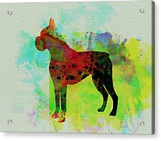 Boxer Watercolor Acrylic Print by Naxart Studio