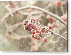 Branches With Early Winter Frost With Red Berries Acrylic Print by Sandra Cunningham