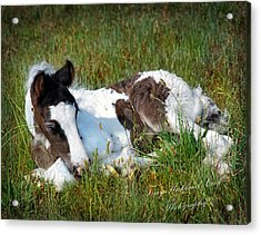 Brand New Isaac Acrylic Print by Terry Kirkland Cook