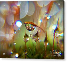 Brand New One Acrylic Print by Sally Siko