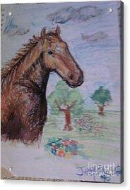 Brandy The Horse Acrylic Print by Jamey Balester