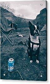 Brewdog Bull Acrylic Print by Justin Albrecht