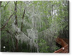 Bridal Veil Tree Acrylic Print by Mark Cheney