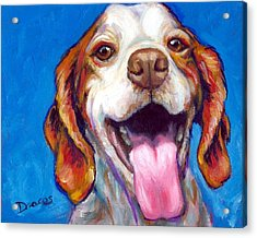 Brittany Spaniel Smiling Acrylic Print by Dottie Dracos