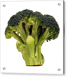 Broccoli  Acrylic Print by Olivier Le Queinec