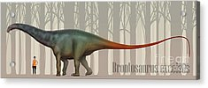 Brontosaurus Excelsus Size Compatison Acrylic Print by Christian Masnaghetti