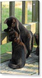 Brotherly Love Acrylic Print by Joyce StJames