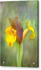 Brown Iris Acrylic Print by Angela A Stanton