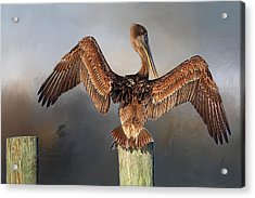 Brown Pelican - Strike A Pose Acrylic Print by HH Photography of Florida