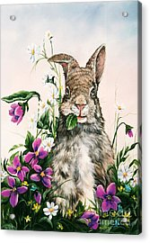 Brunch Bunny Acrylic Print by Jeannie Harrison