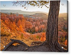Bryce Canyon National Park Sunrise 2 - Utah Acrylic Print by Brian Harig