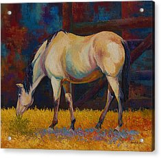 Buckskin Acrylic Print by Marion Rose