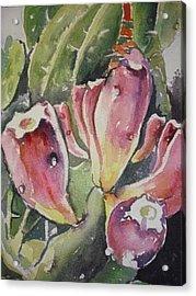Budding Cactus In Spring I Acrylic Print by Aleksandra Buha