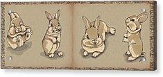 Bunny Sketch Acrylic Print by Veronica Minozzi