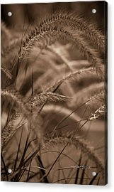 Burgundy Giant Acrylic Print by DigiArt Diaries by Vicky B Fuller