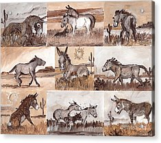 Burros Of The South West Sampler Acrylic Print by Linda L Martin