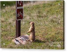 But I Drove 300 Miles To Ride This Trail Acrylic Print by Scott Nelson