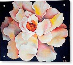 Butter Flower Acrylic Print by Jordana Sands