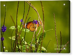Butterfly And Flower Acrylic Print by Venura Herath