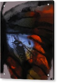 Butterfly Birds Collection  Acrylic Print by Debra     Vatalaro