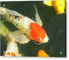 Butterfly Koi Acrylic Print by Phyllis Beiser